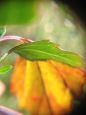 green-leaf-and-orange-leaf