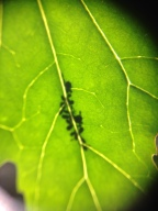 green-leaf-with-bugs