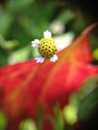 mini-yellow-and-white-flower