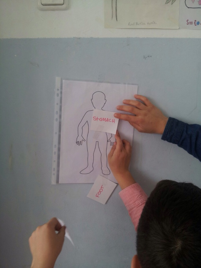 teaching-body-parts