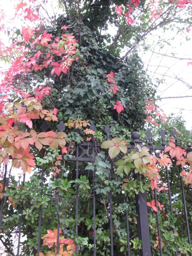 tirana-leaves