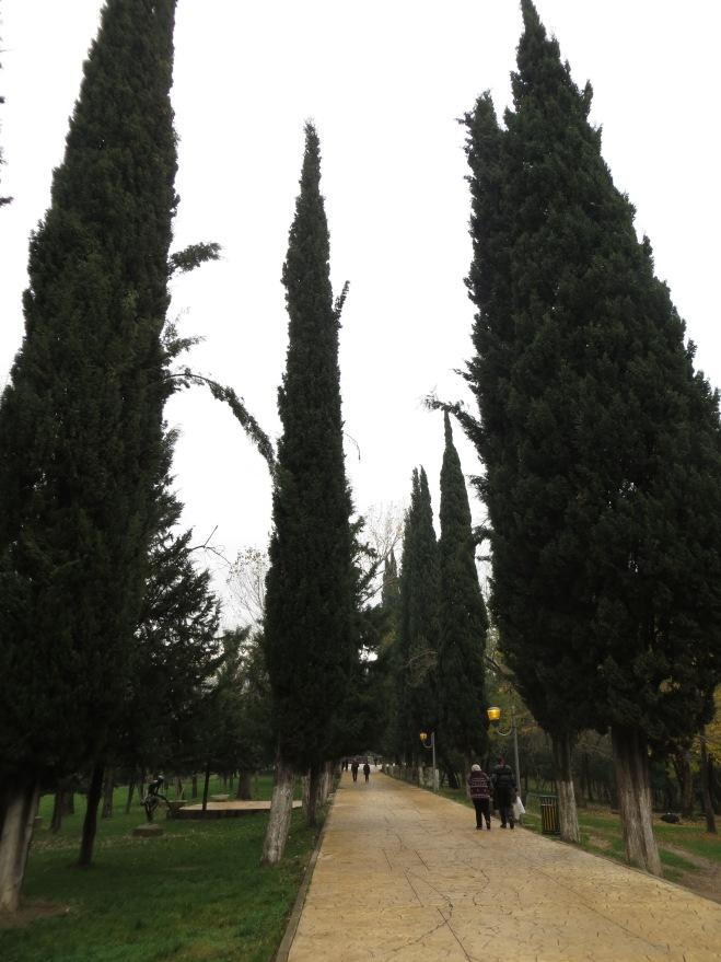tirana-tall-trees