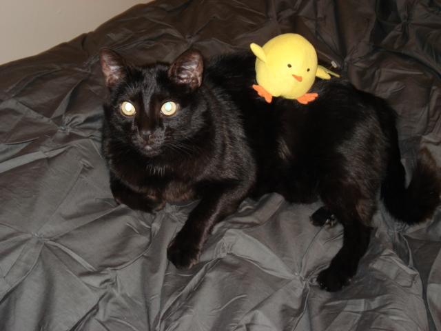 Oz + Chick