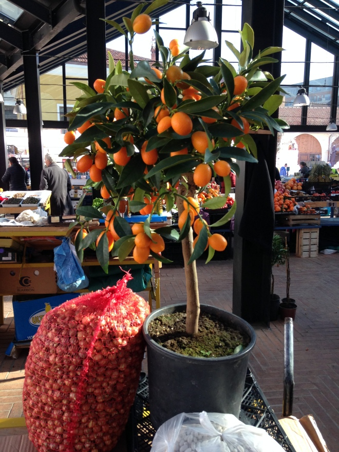 orange tree Tirana market