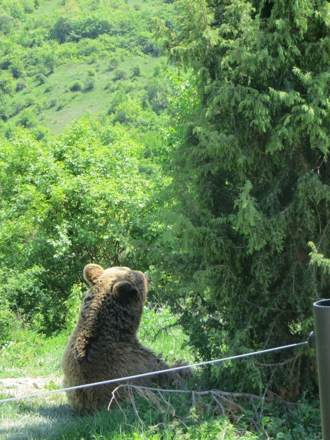 bear chilling in the shade